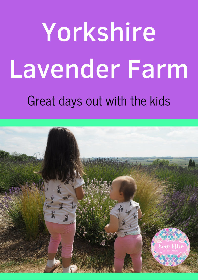 yorkshire lavender farm with kids pin