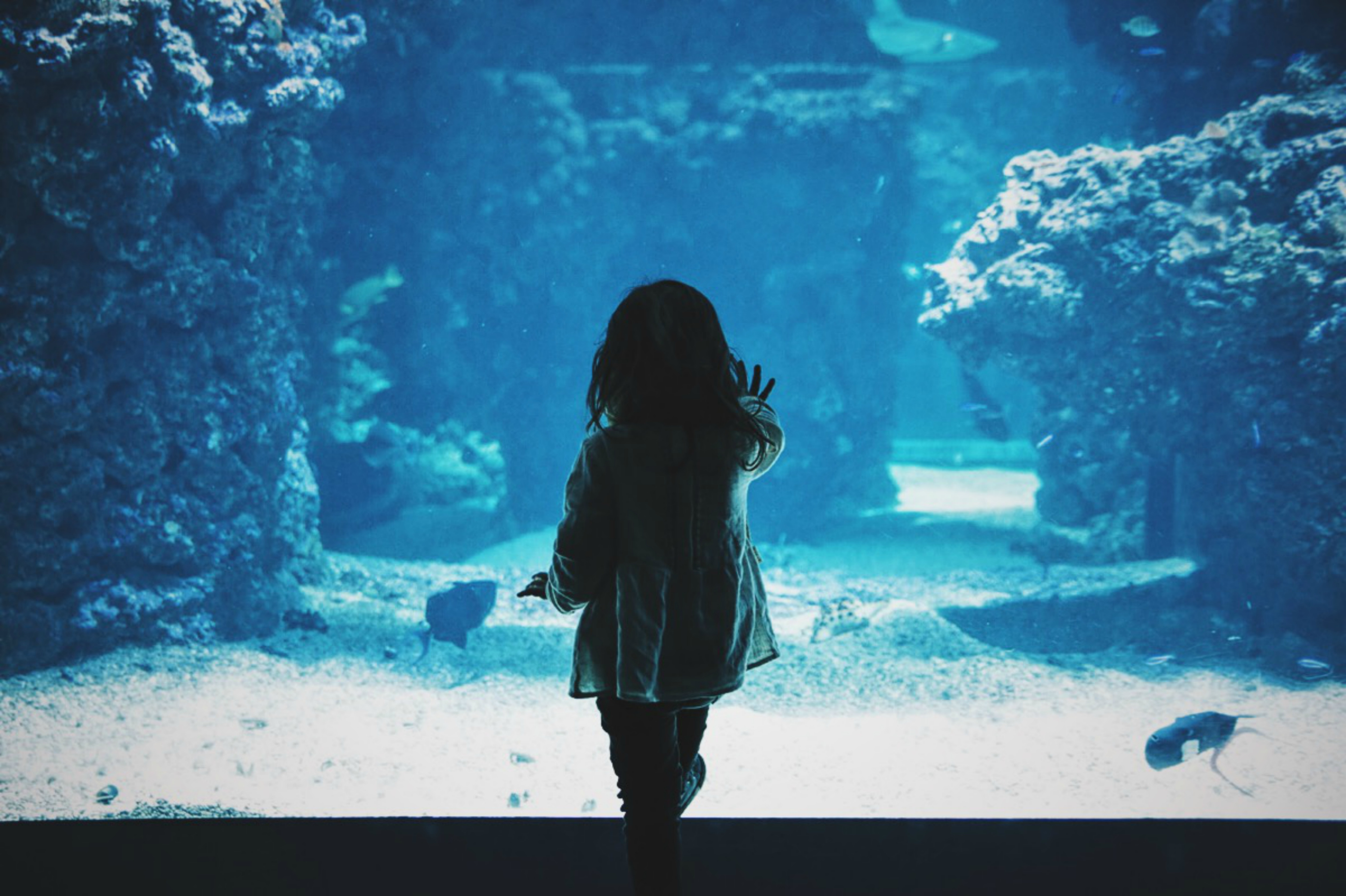sealife centre giveaway win